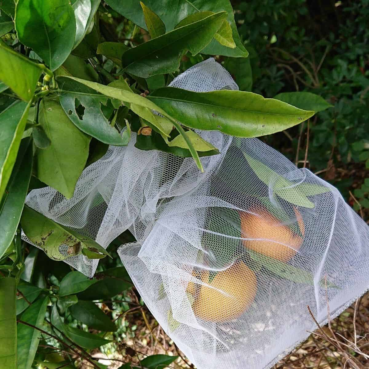 fruit protection bags